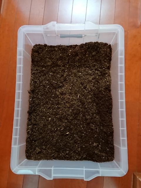 カブトムシの飼育2018⑬